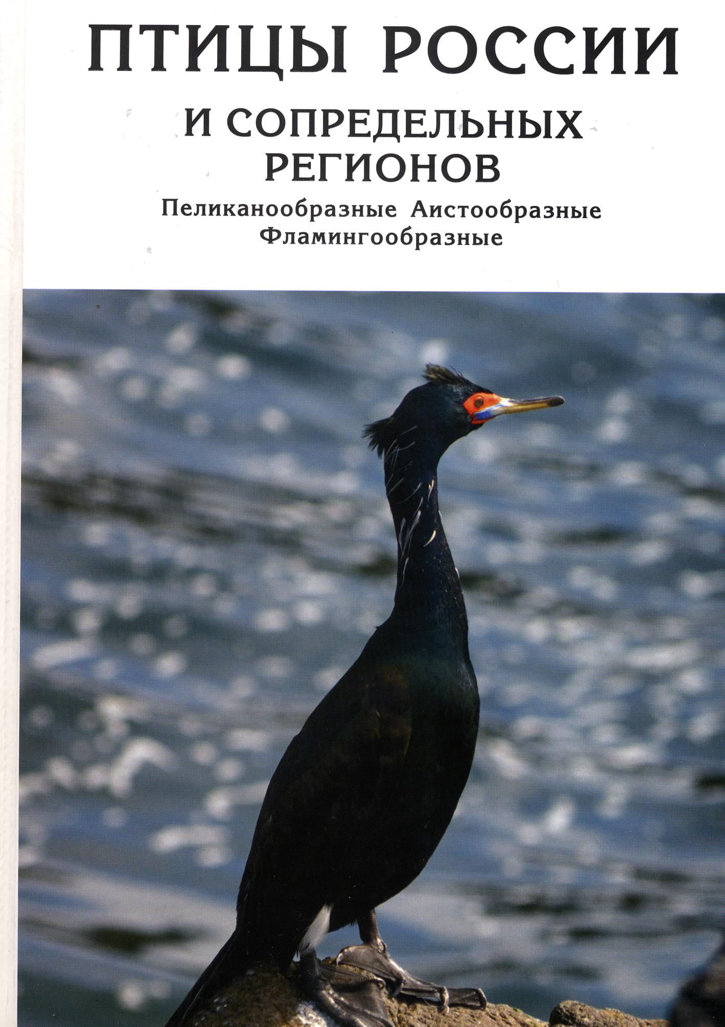 http://www.avtor-kmk.ru/photos/0000000492_00.jpg